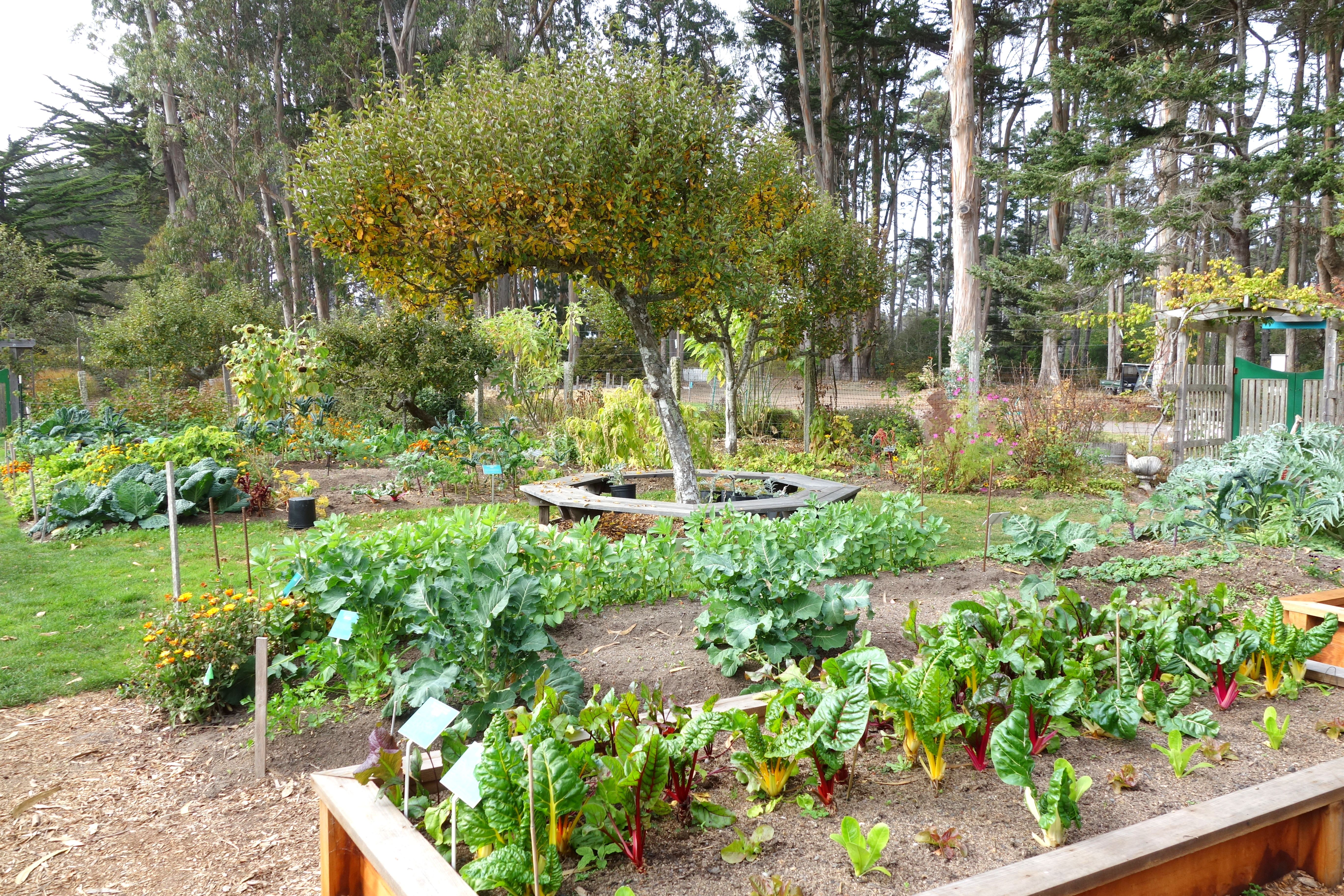 File:Vegetable Garden   Mendocino Coast Botanical Gardens   DSC02172.JPG