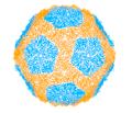Viruses-10-00481-g001.PH6.png