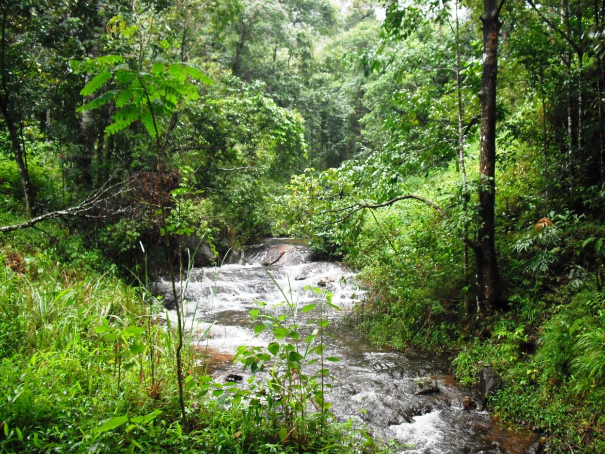A scenic cascading river in Silent Valley National Park top unexplored places in India