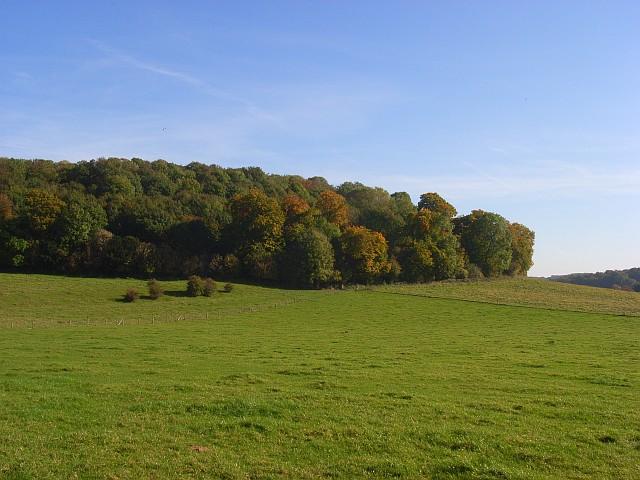 Yoesden Wood, Radnage - geograph.org.uk - 1014245
