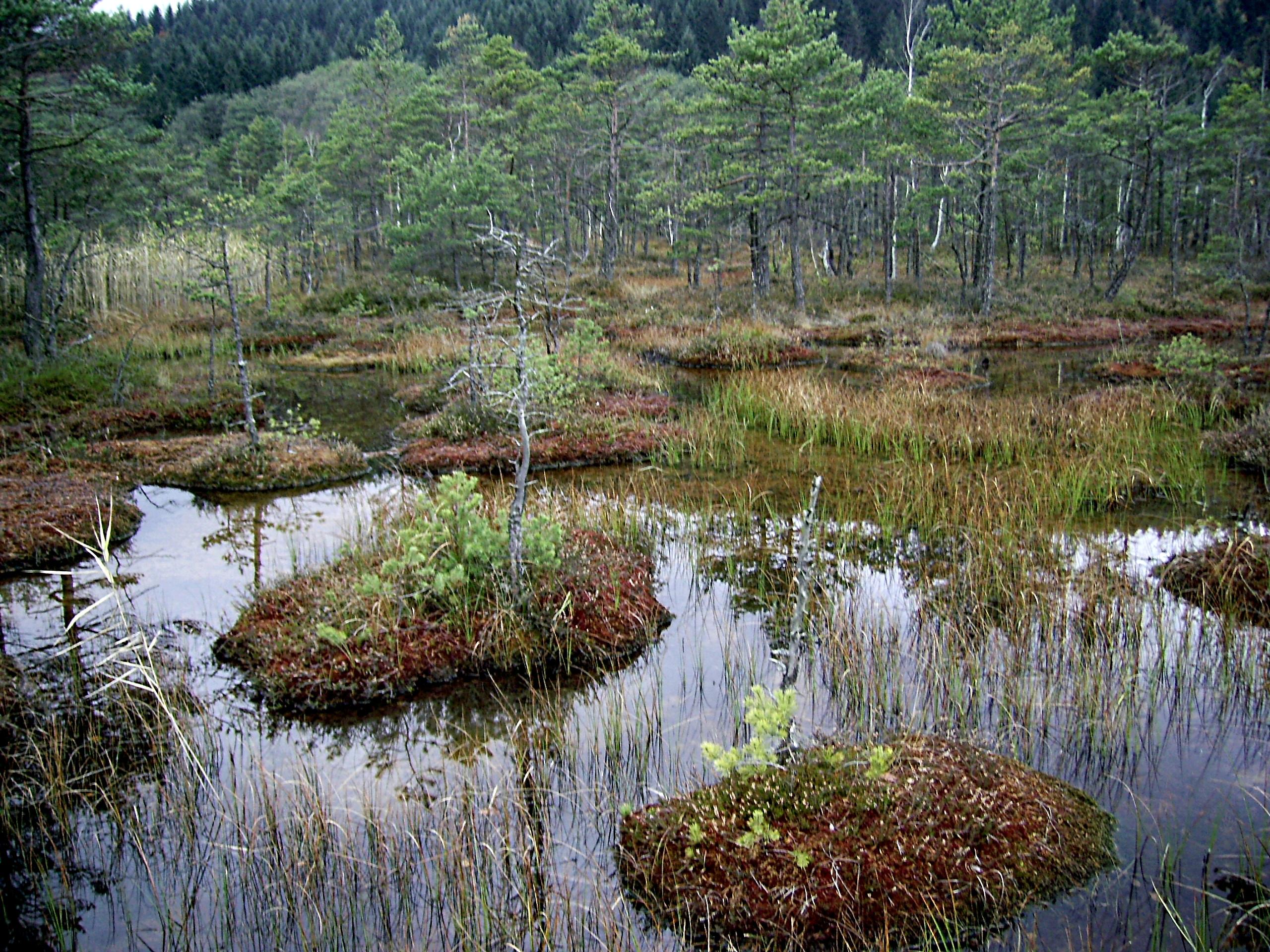фото болота чокморова практически
