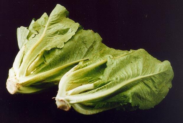 gambar Romaine Lettuce