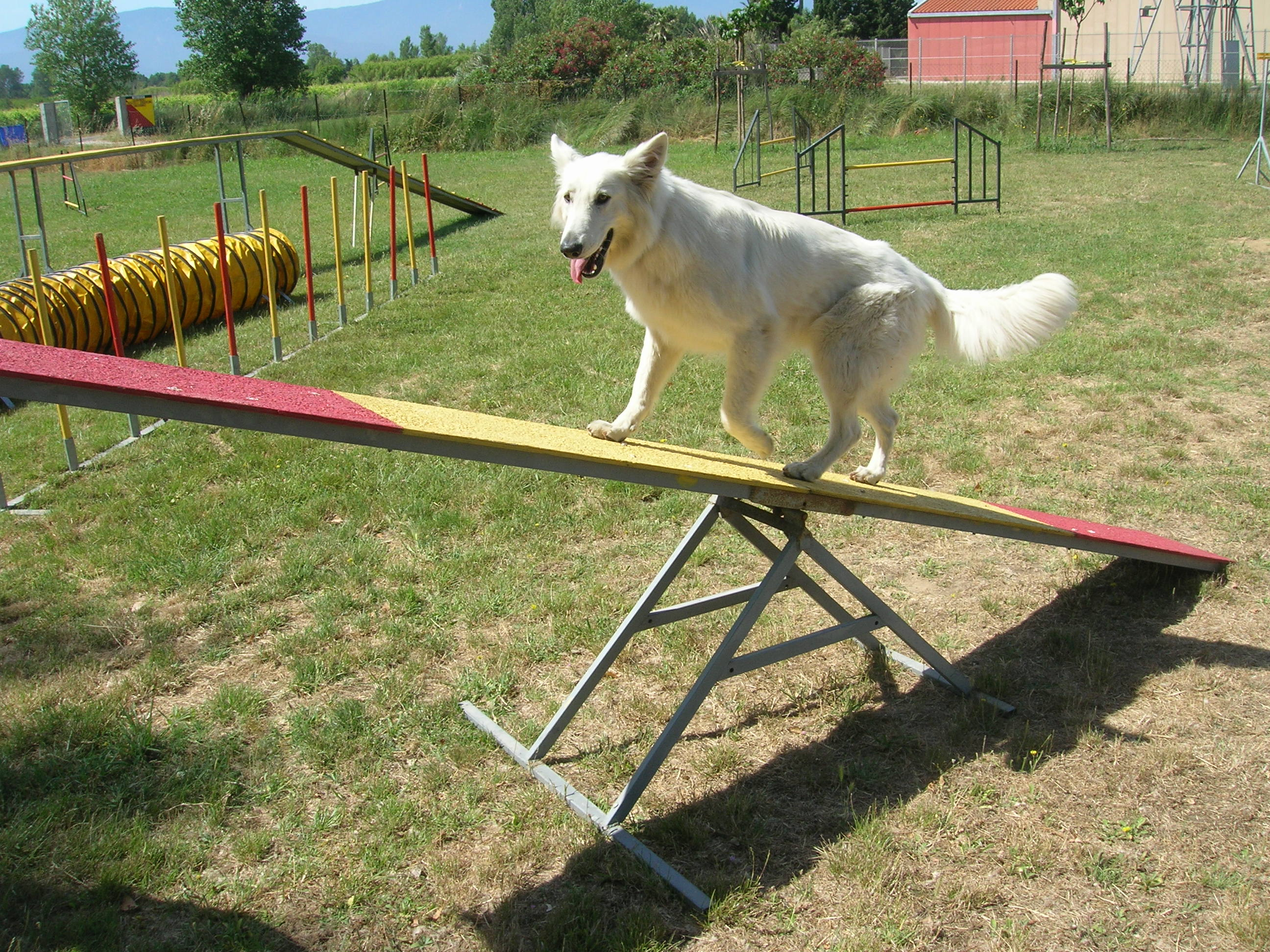 Dog Training In Levittown Pa