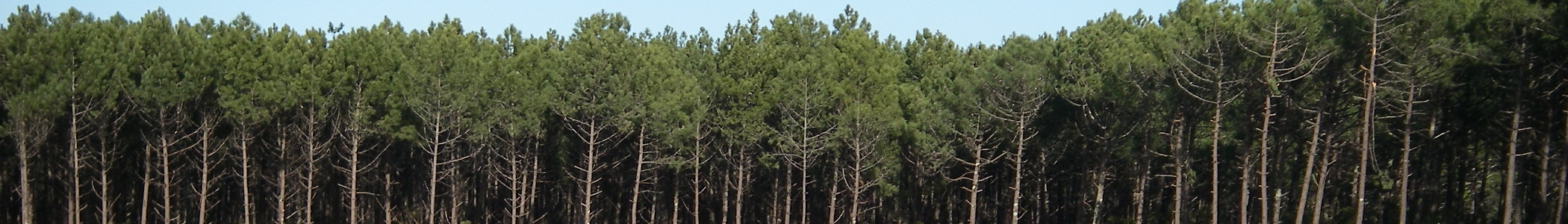 file aquitaine banner landes forest jpg wikimedia commons