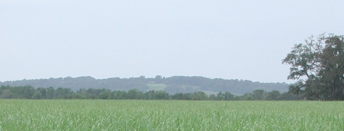 Avery Island in the distance as viewed across the sugar cane fields