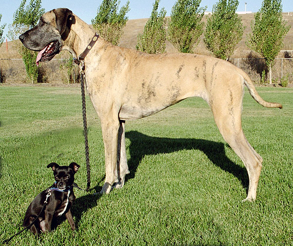 List of dog breeds - Wikipedia
