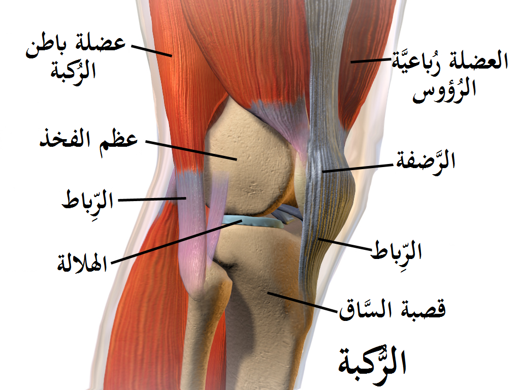 knee diagram to label the muscles around knee diagram