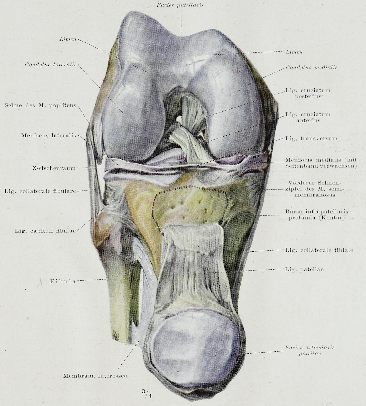 Groß Hinterhaupts Kondylus Anatomie Fotos - Anatomie Ideen - finotti ...