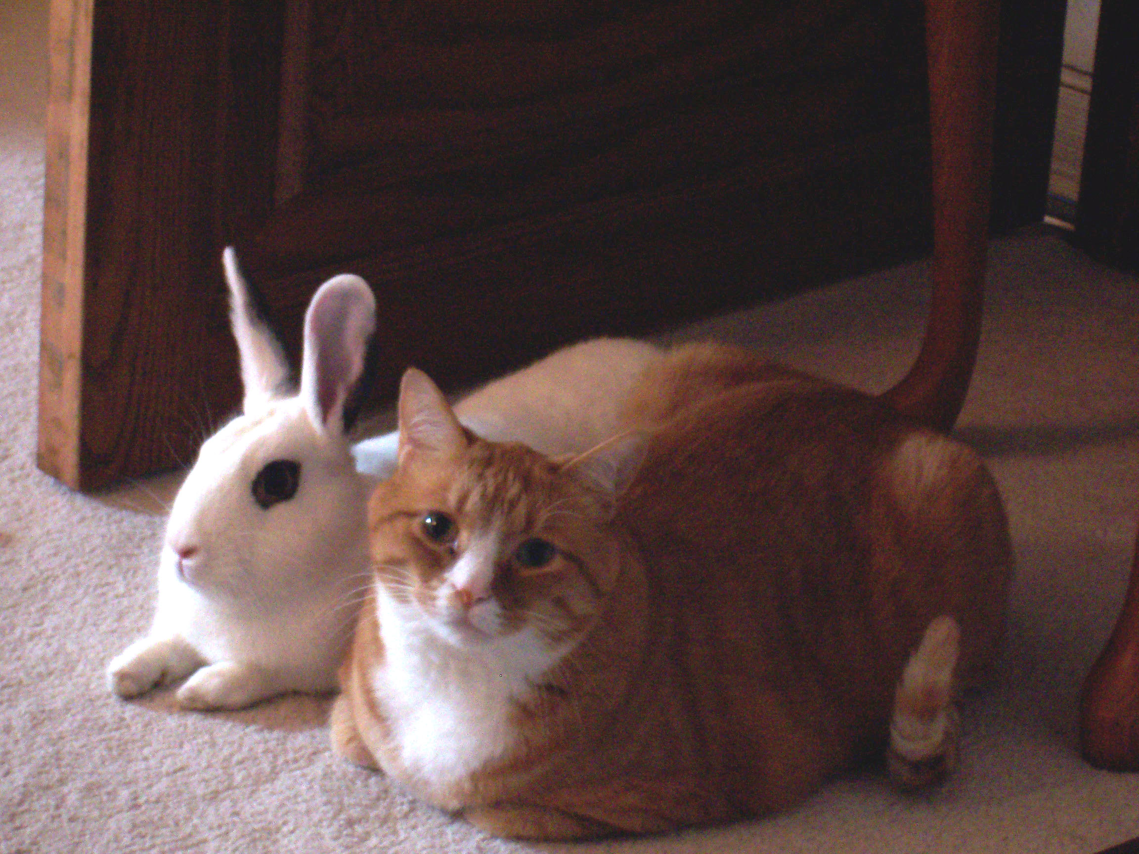 Cats And Bunnies Best Fried