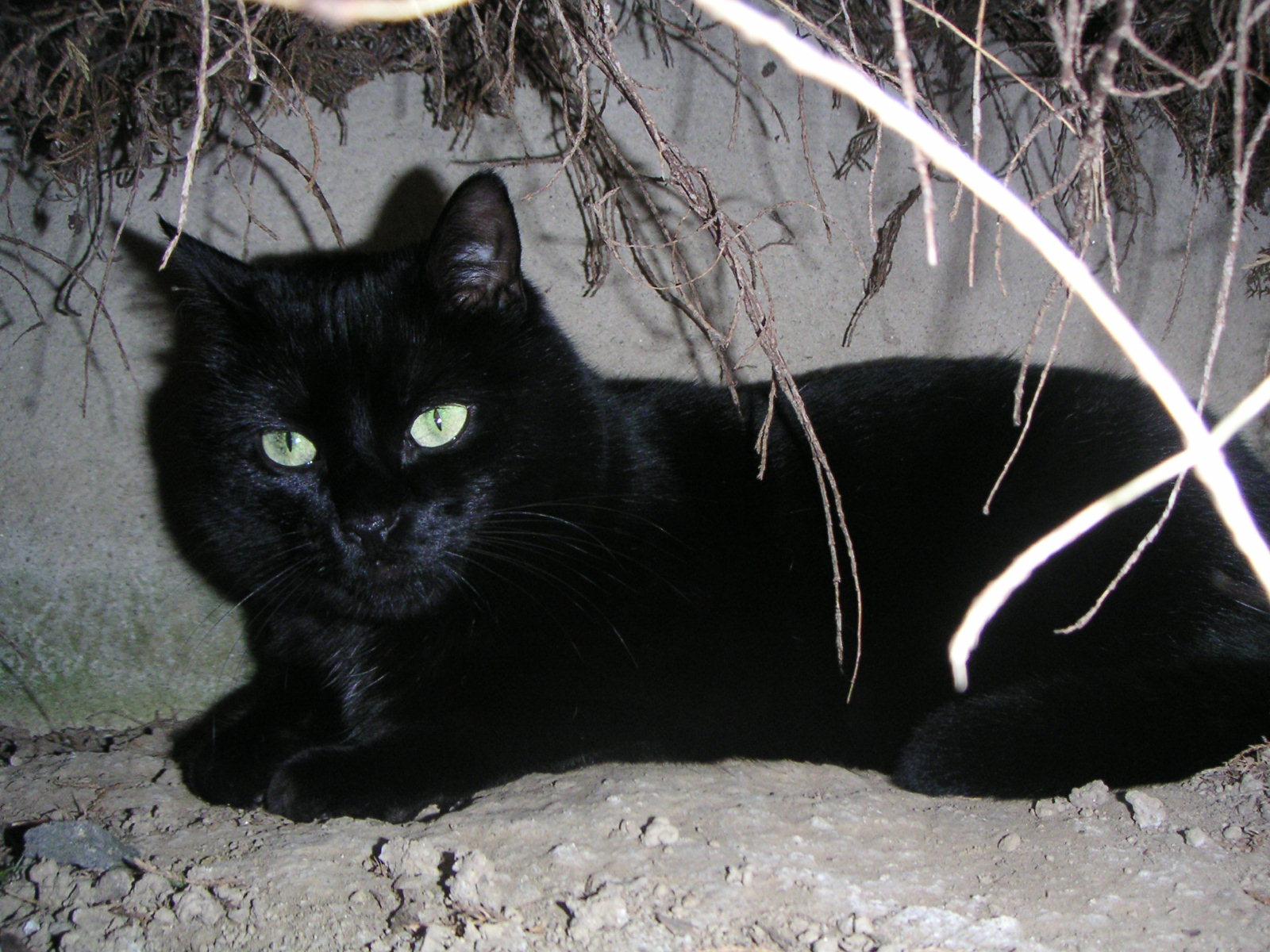 noir local chatte pics chanson orgie