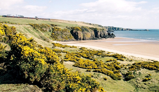 Cliffs on the north side of Lunan Bay - geograph.org.uk - 196079