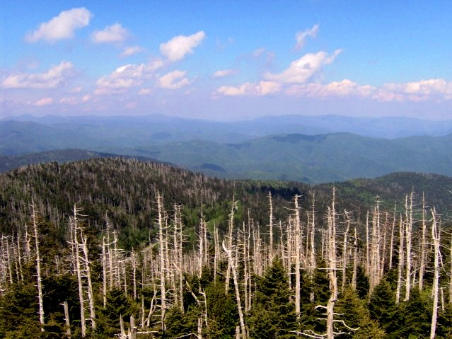 File:Clingmans-dome-newfound-gap-tnnc1.jpg