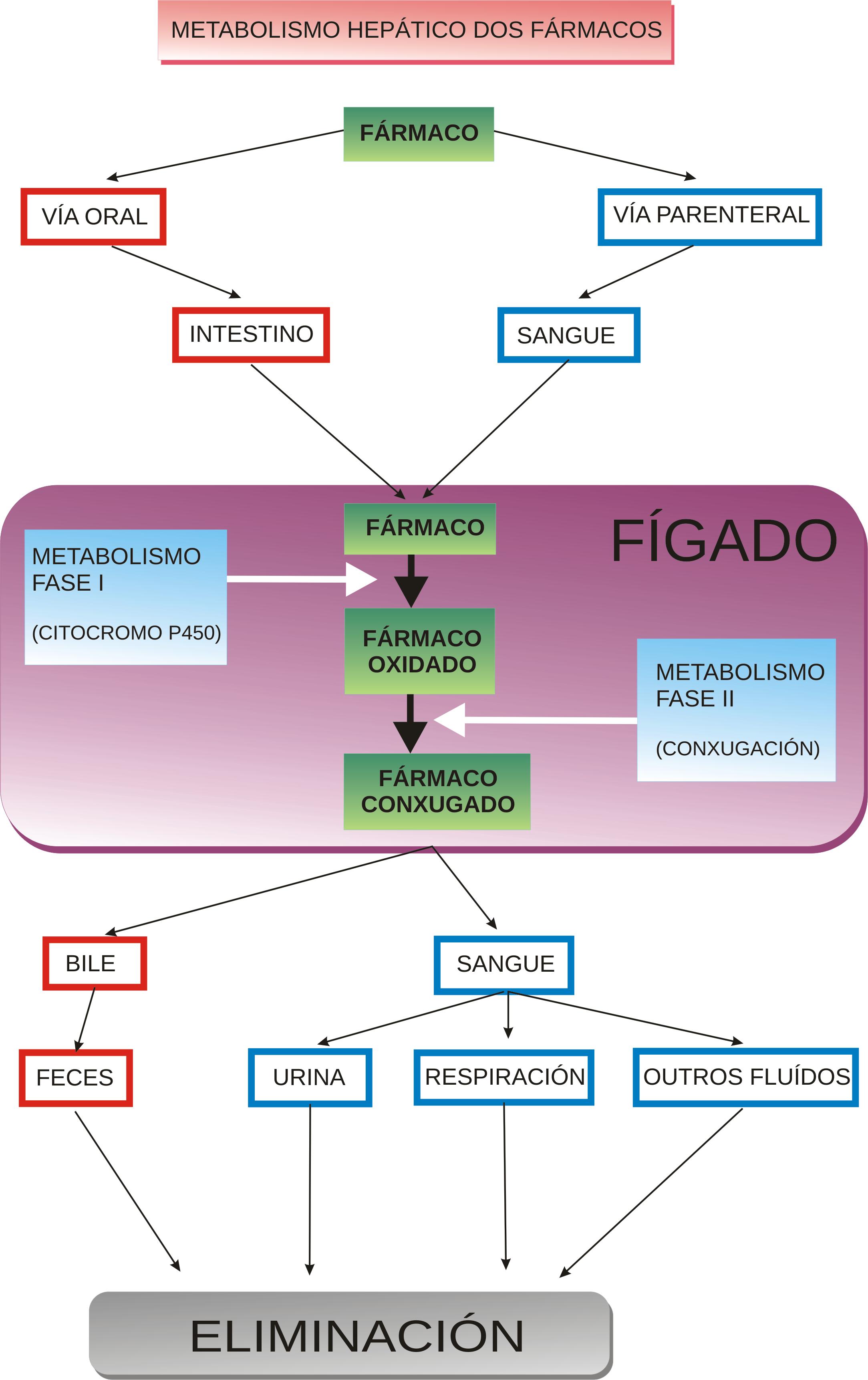 File:Diagrama metabolismo hepático gl.png - Wikimedia Commons