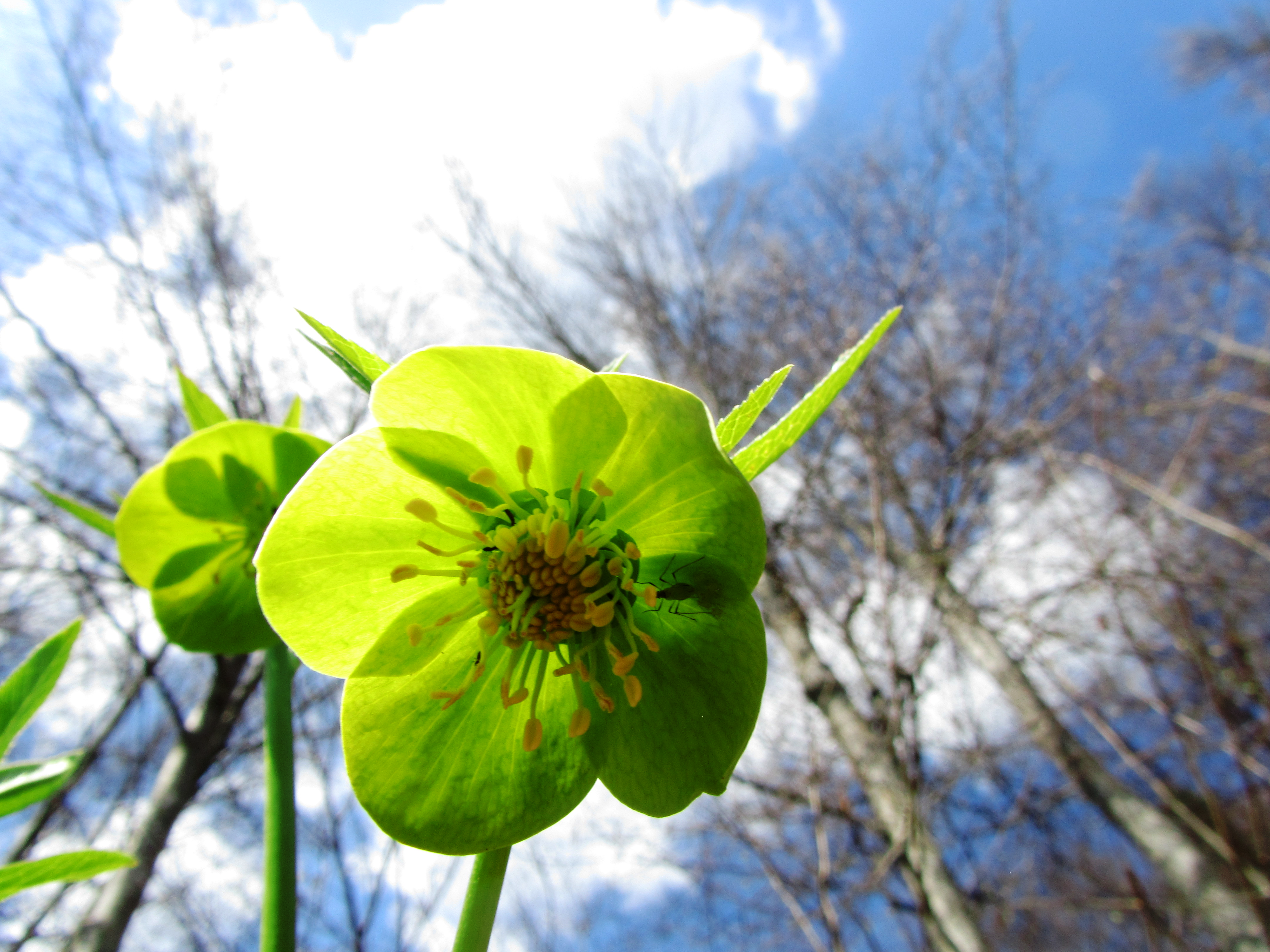 Fiori Di Primavera.File Fiore Di Primavera Sul Bertiaga Png Wikimedia Commons