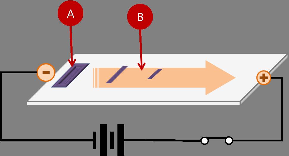 Gel electrophoresis virtual lab worksheet answers – Gel Electrophoresis Virtual Lab Worksheet