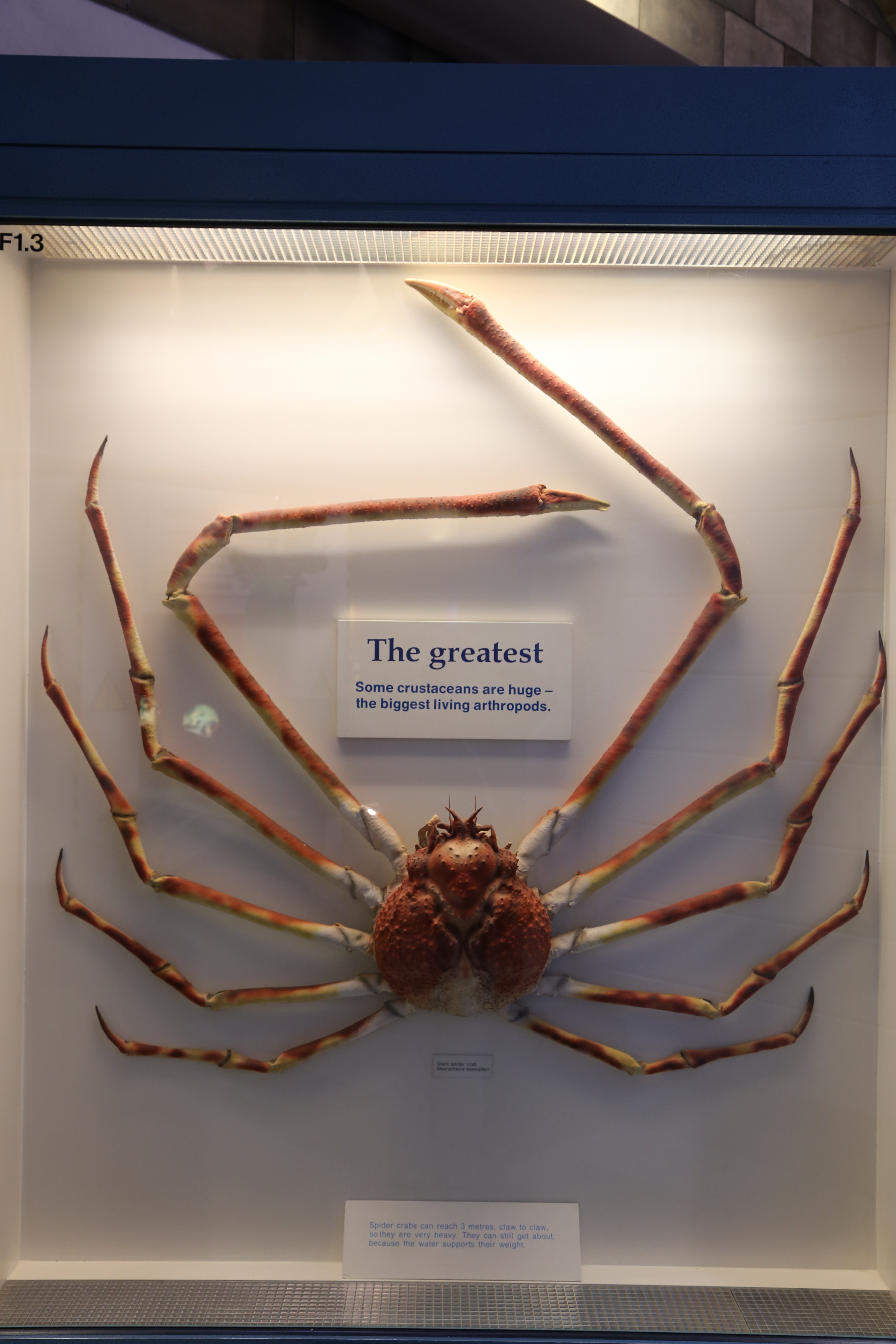 Spiders At Natural History Museum