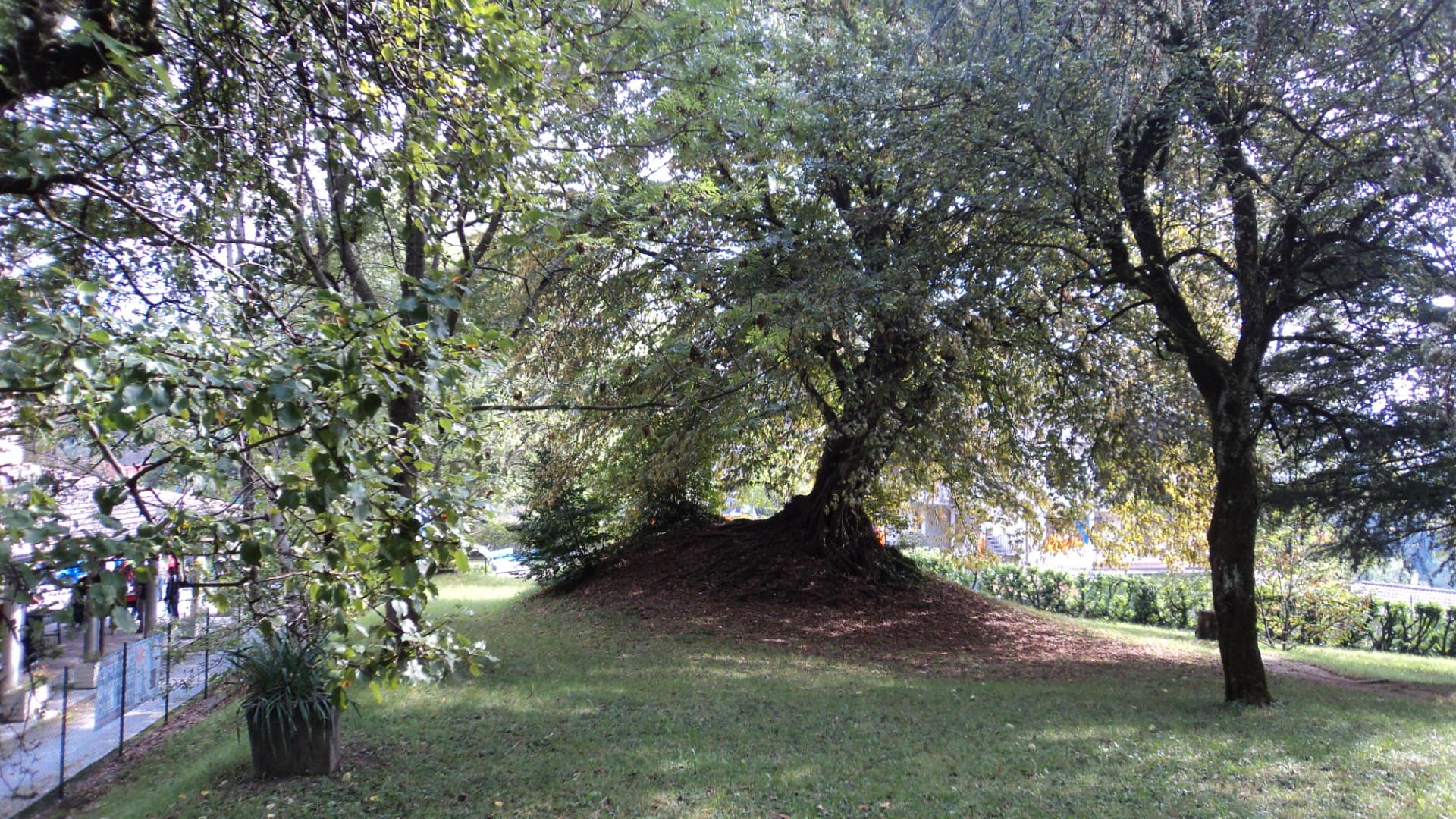 Giardino Di Una Casa file:giardino della casa - panoramio (1) - wikimedia commons