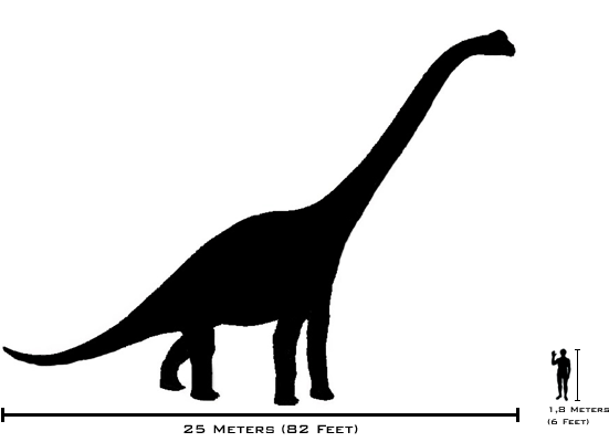 Description human brachiosaurus size comparison