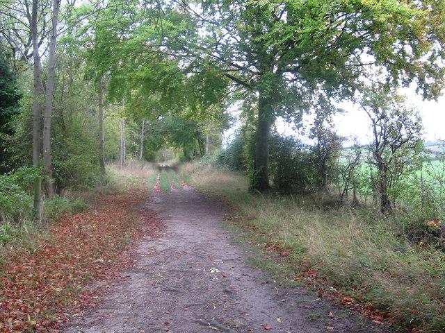 Icknield Way near Tingley Wood - geograph.org.uk - 315056