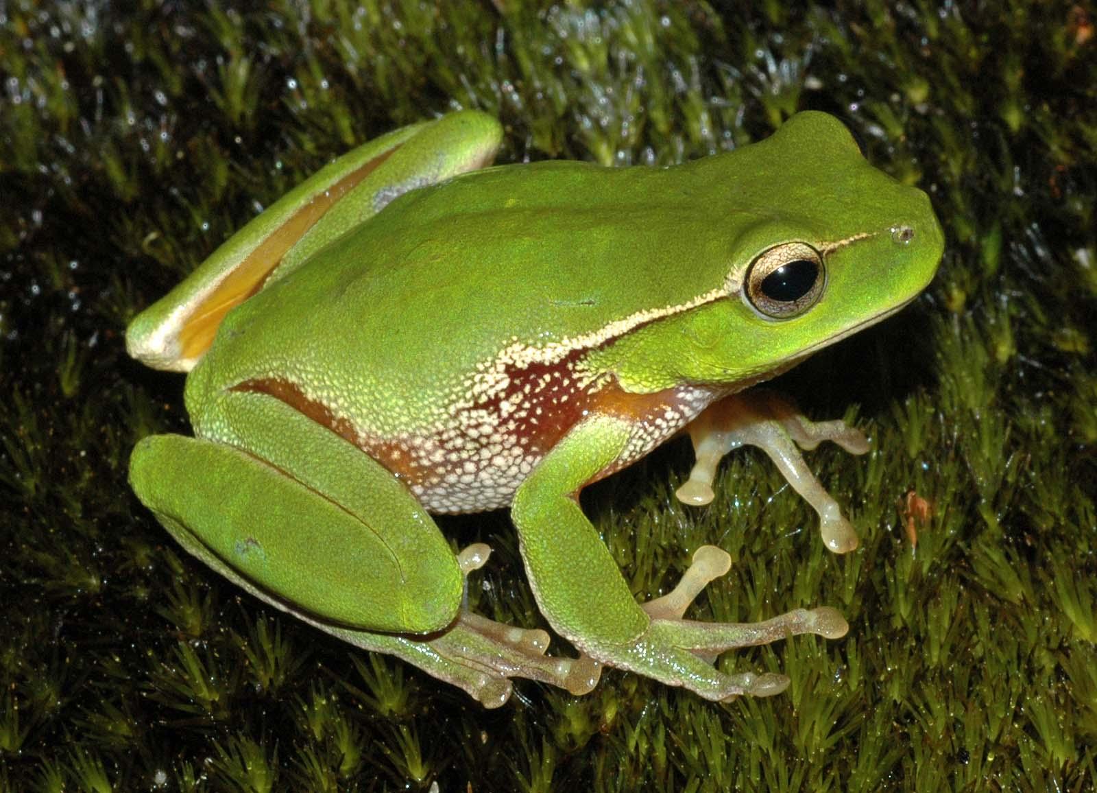 Image Result For Frog