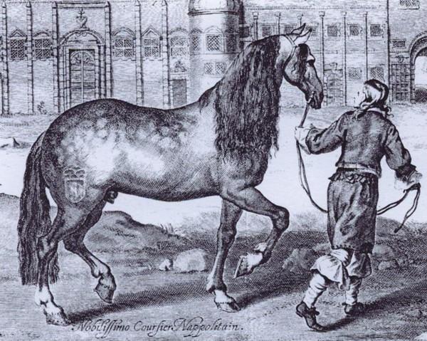 Neapolitan Horse - Horse Scanner