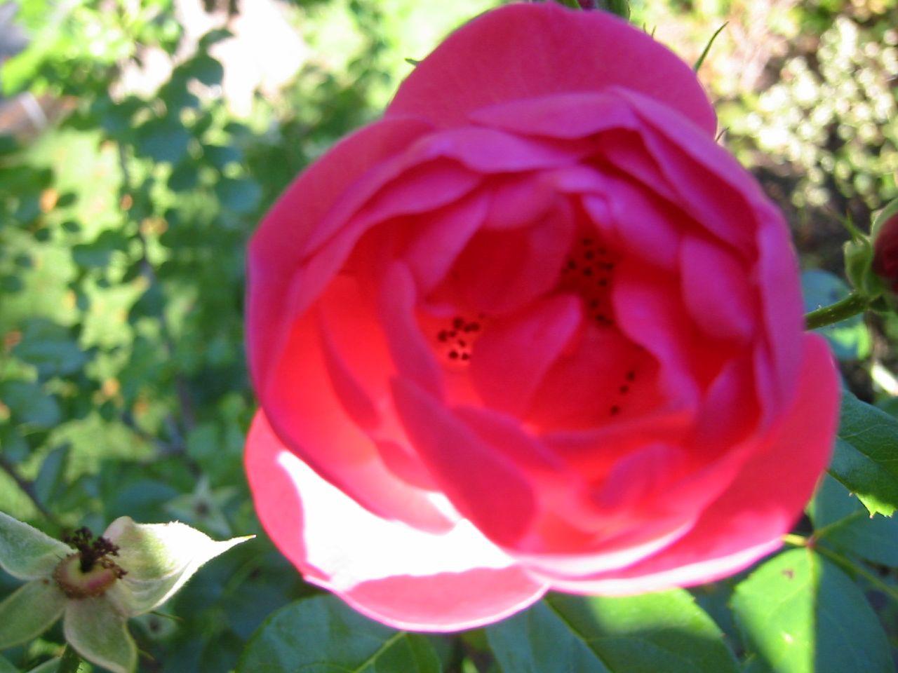 File Nova Scotia Blomidon Inn Flower 13 Wikimedia mons