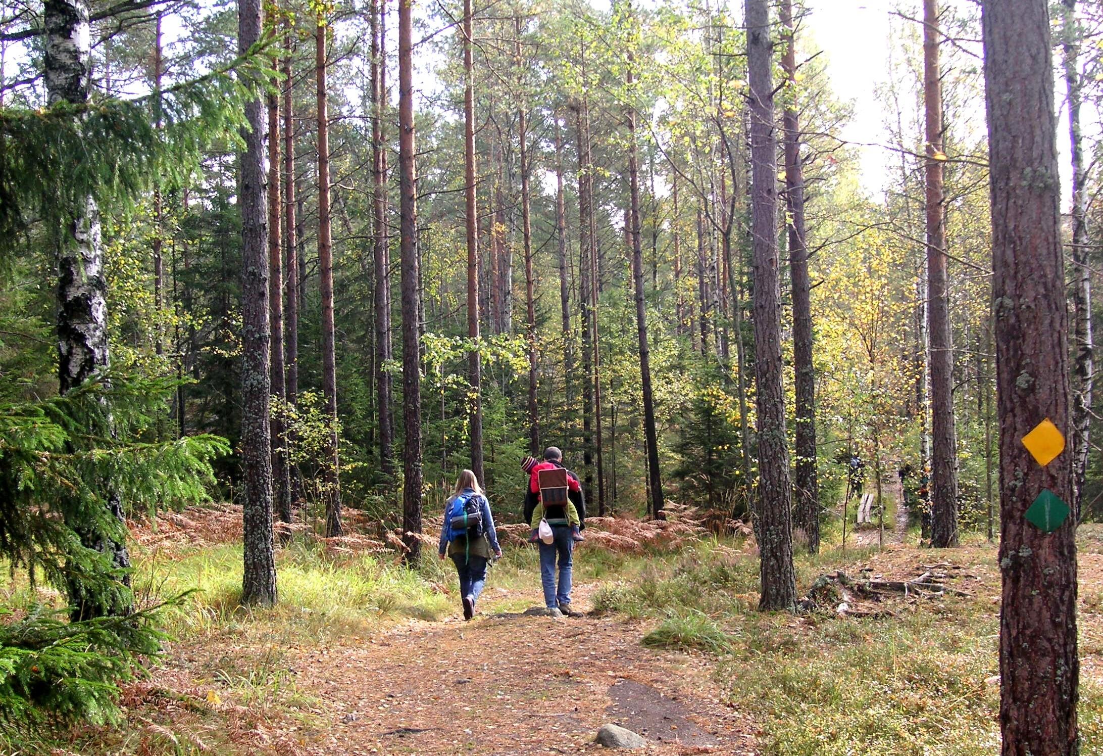 Erholung im Wald (Holger.Ellgaard)