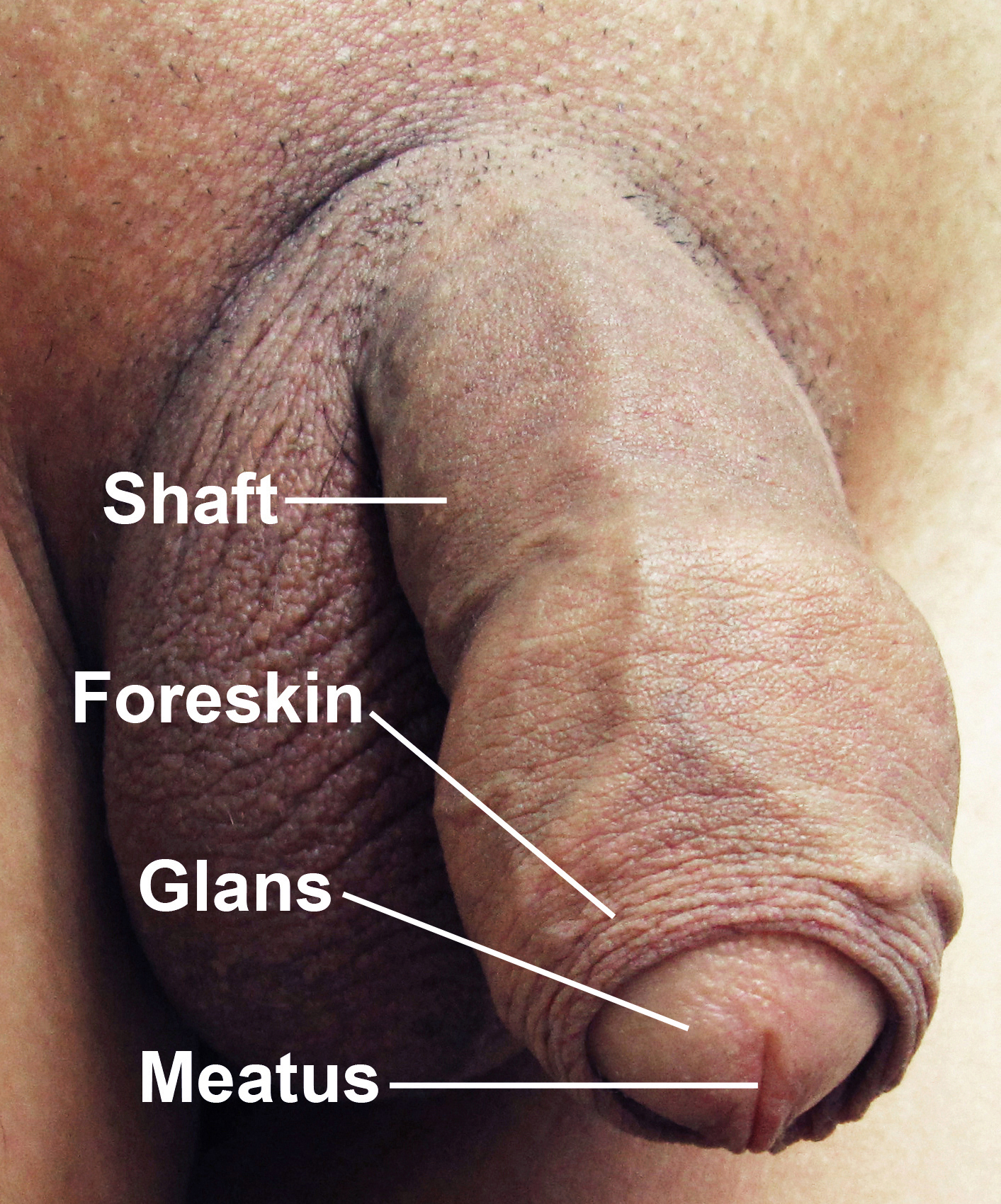 Soft penis for help and short