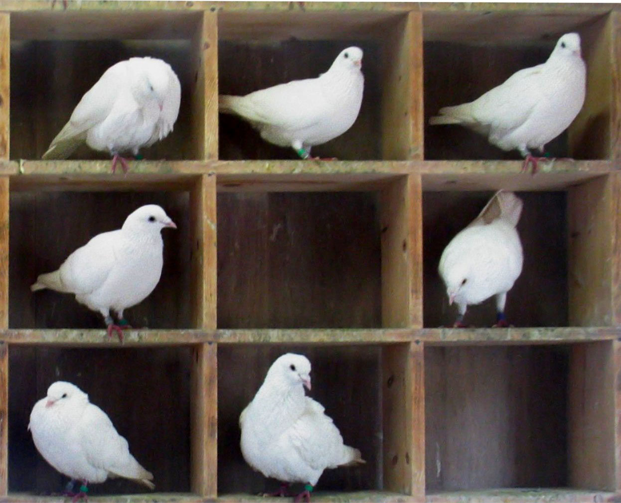 Pigeon Nest Boxes and Perches http://en.wikipedia.org/wiki/File:Pigeons-in-holes.jpg