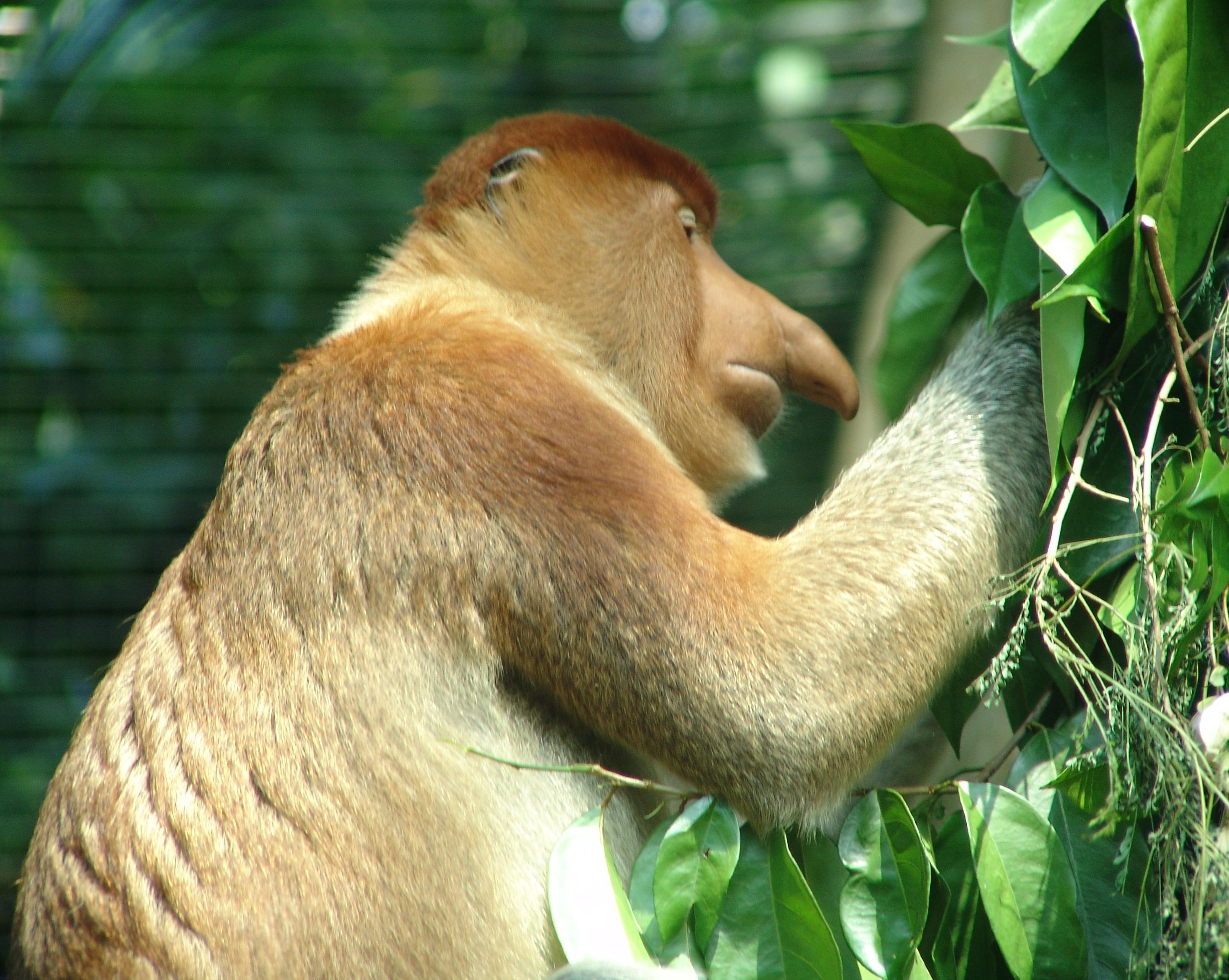 MiniMonos Paradise: New Looks on Monkey Fact Monday!