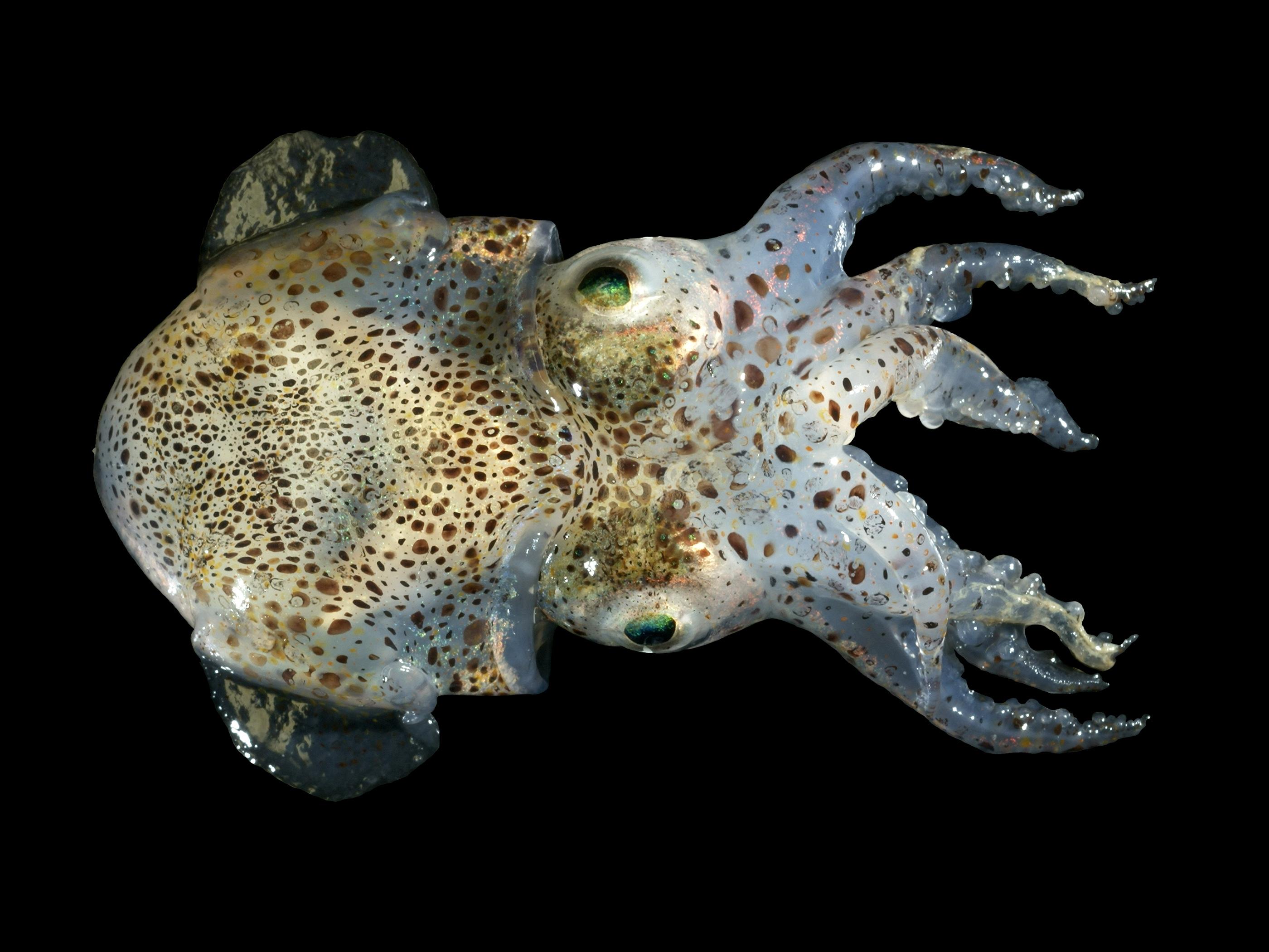 Cephalopod - Wikipedia