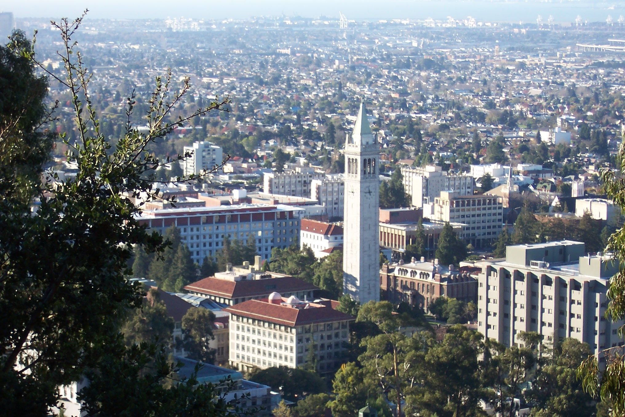 UC Berkeley Best Pizza and Burgers