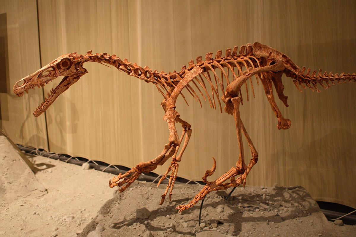 velociraptor wikipdia