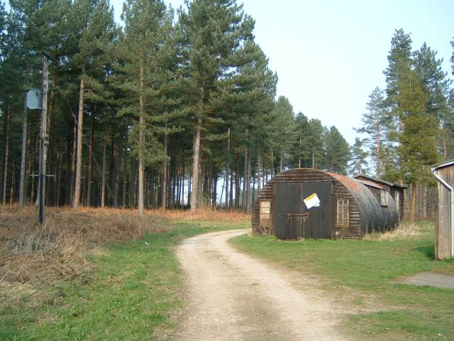 Wheldrake Wood - geograph.org.uk - 1217