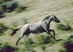 Mustang en wyoming