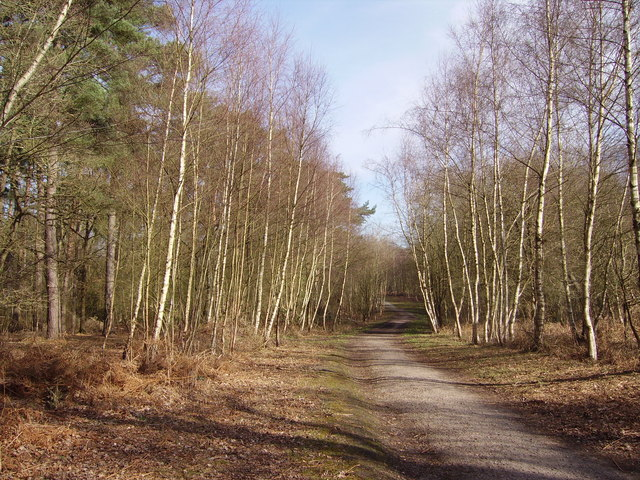 Woodland path near Fleet Pond Nature Reserve - geograph.org.uk - 714785