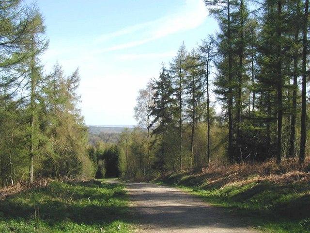 Yearsley Woods - geograph.org.uk - 163412