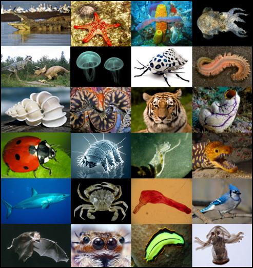 rencontres pour les amoureux des animaux au Royaume-Uni Top dix sites de rencontres