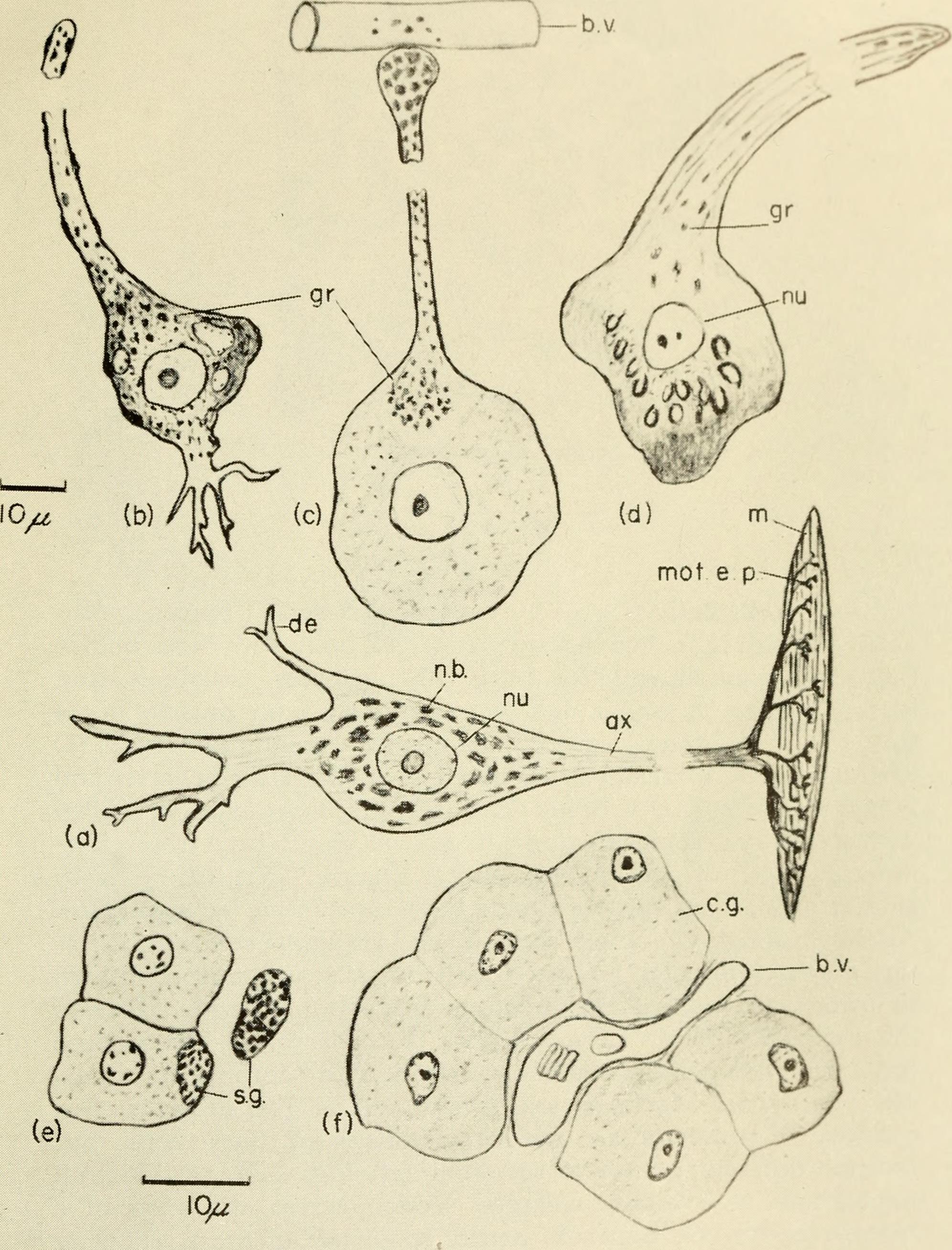File:Animal hormones; a comparative survey (1962) (18197378361 ...