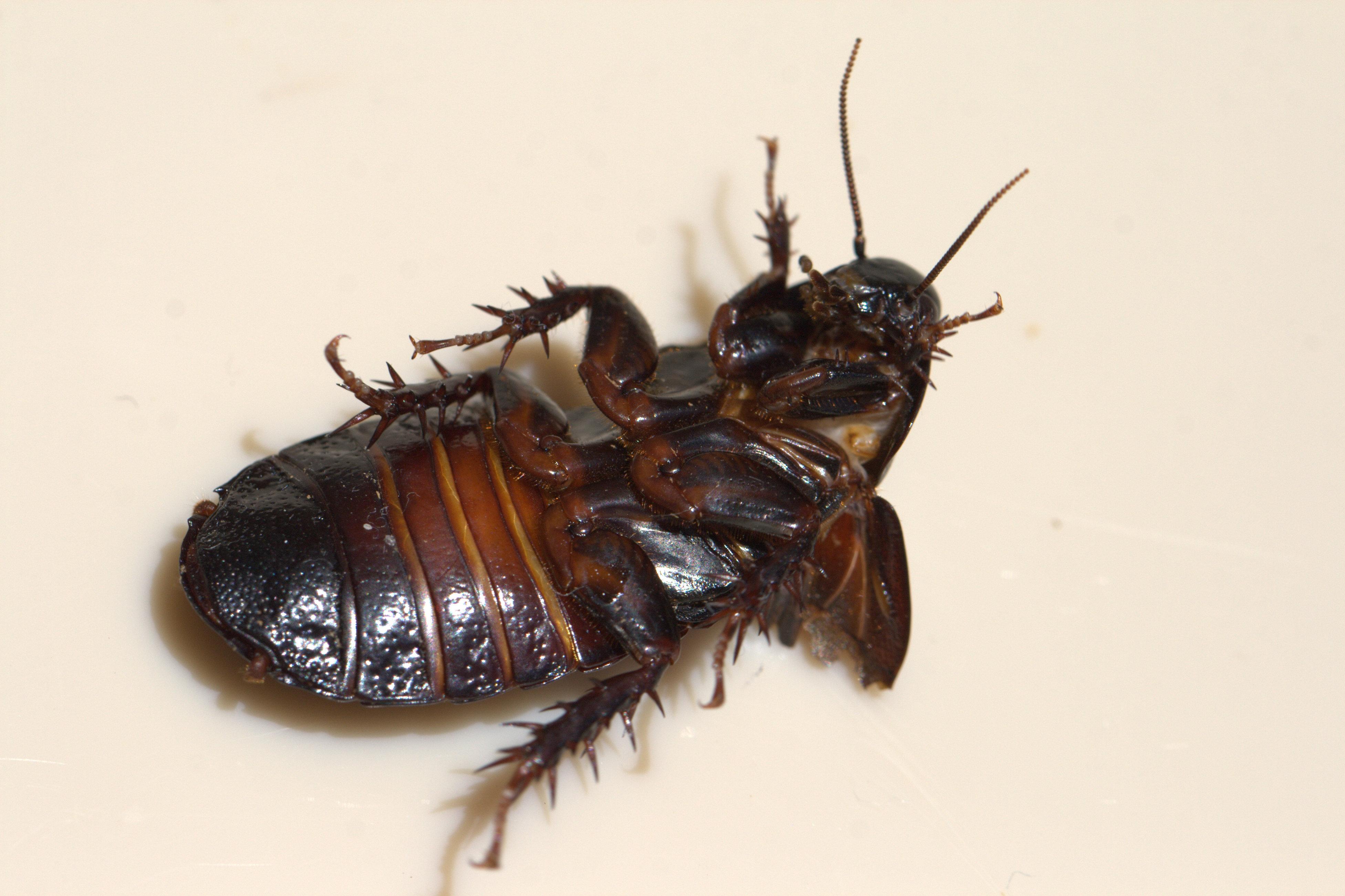 cockroach-wiki-lynn-sexy-girls