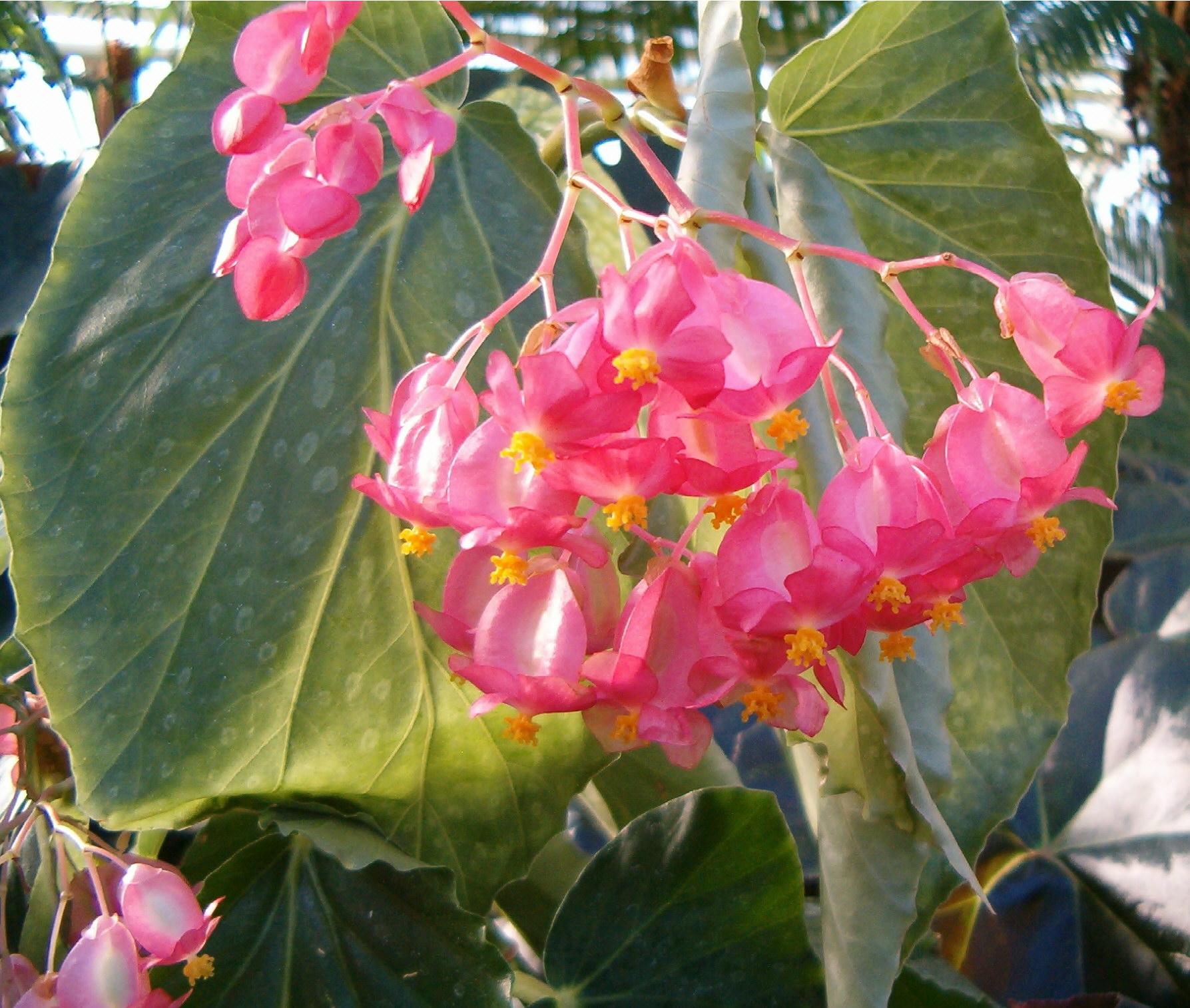 Cora Fleur Exterieur Decorative