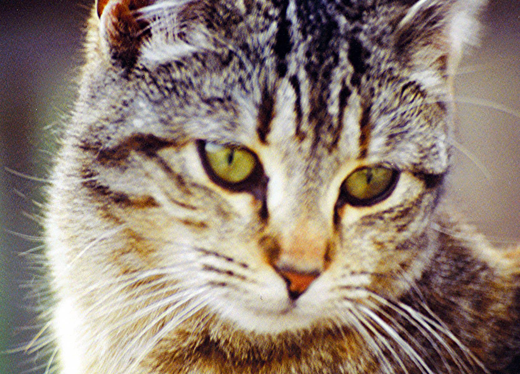 Cat Face A Treia Parte Dintr Un Intreg