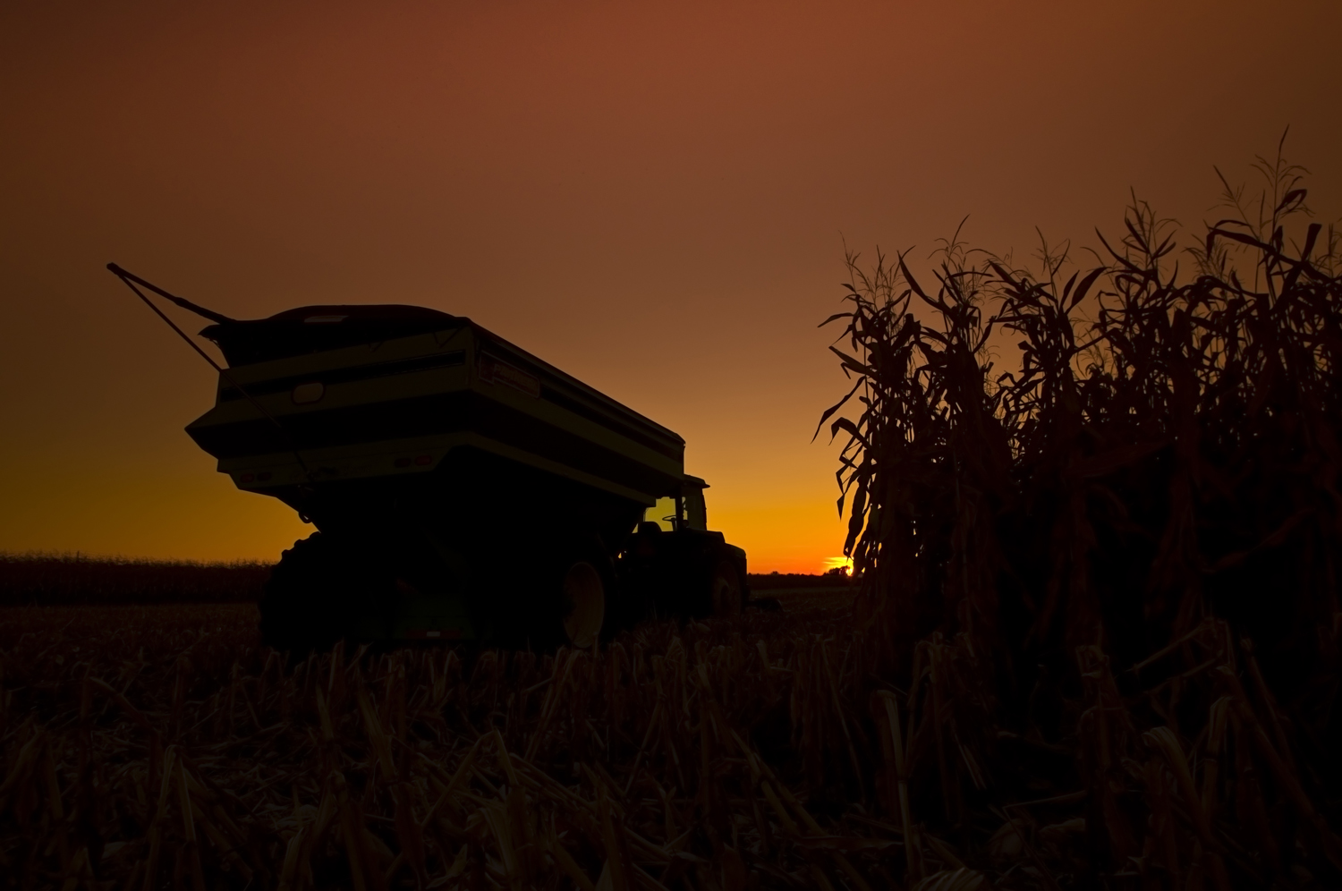 Filecorn Field And Tractor With Trailer At Sunset Jpg