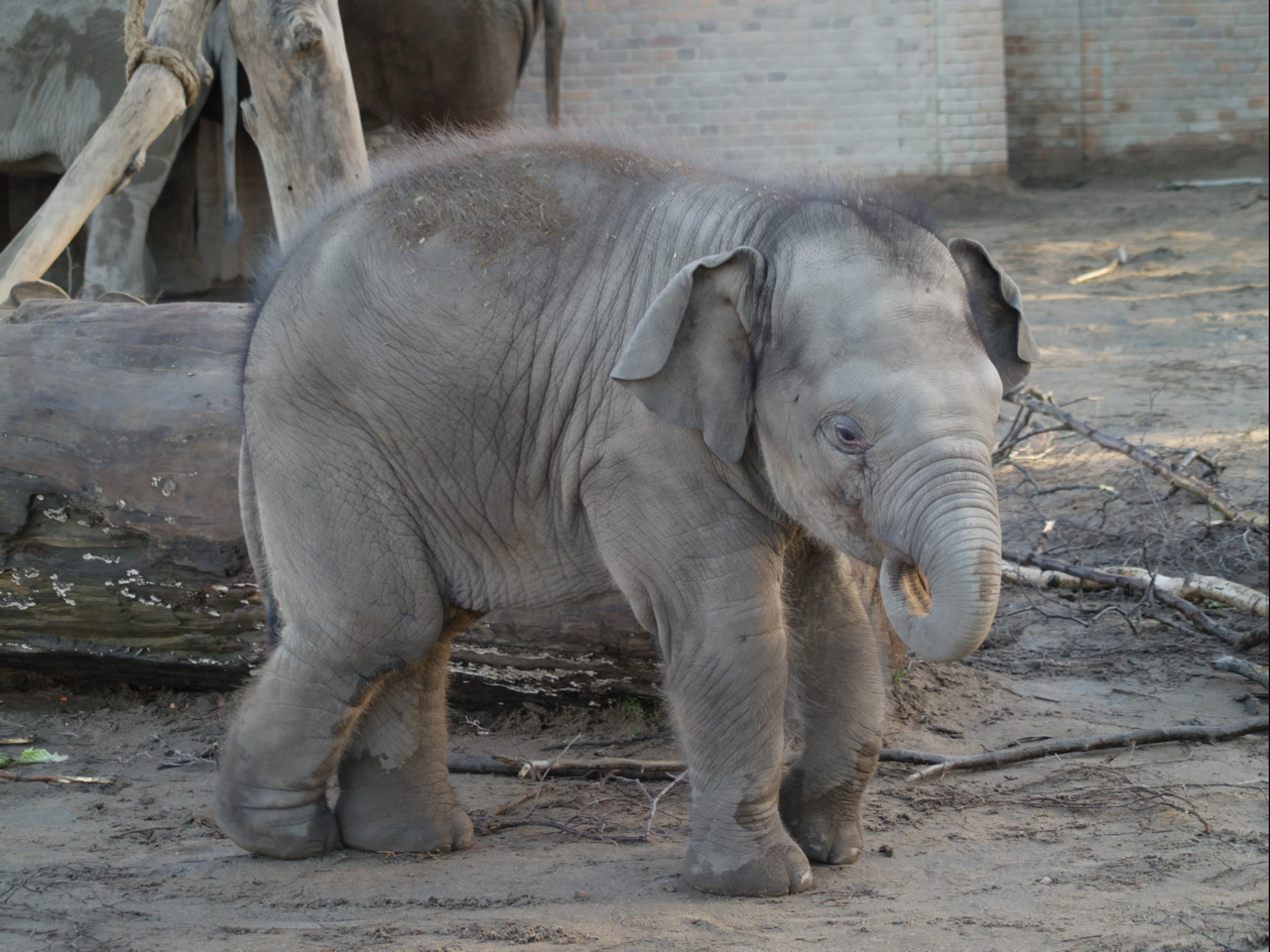 Description Elefant baby 318774561.jpg