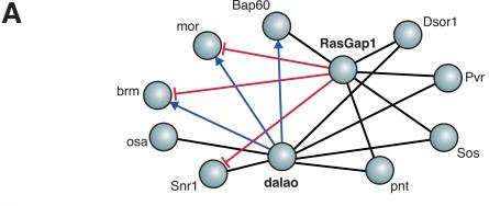 Protein Protein Interaction Wikipedia