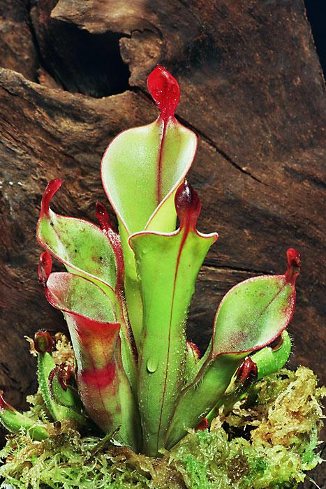 食 中 植物