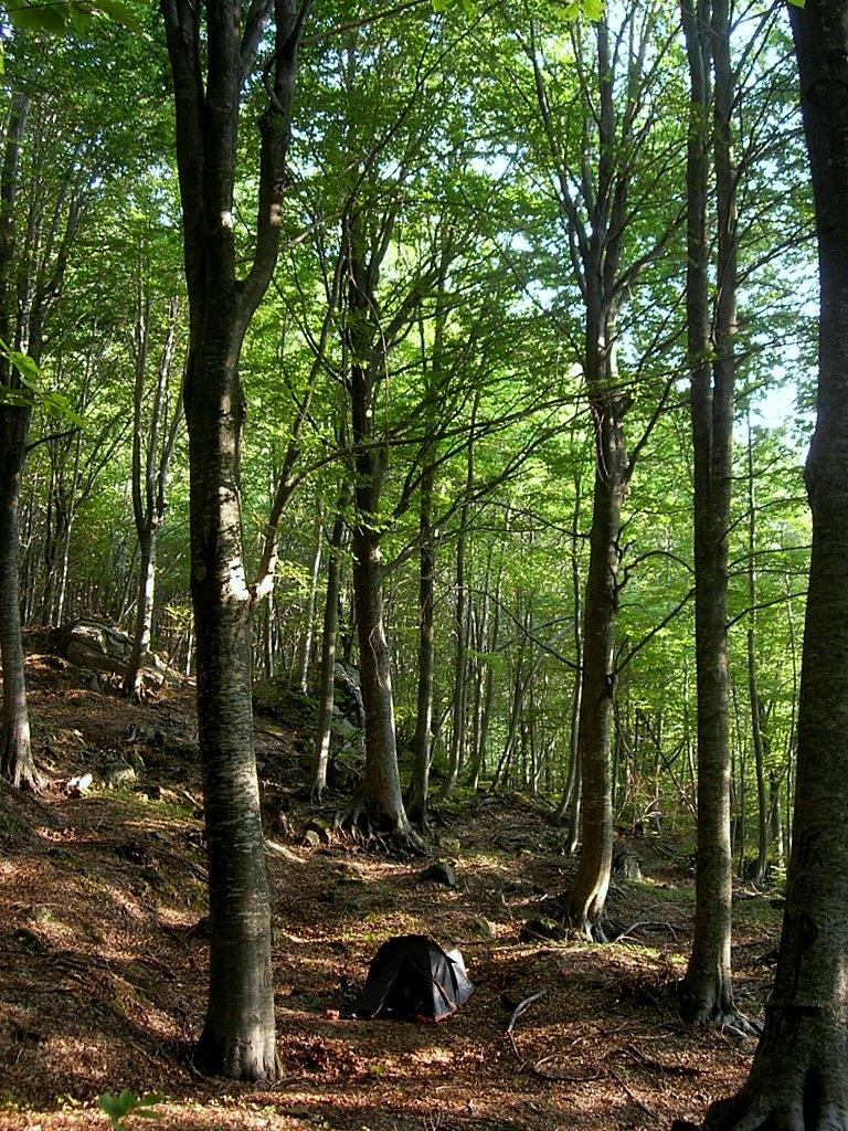 4 dominio de clima oce nico - Arce arbol espana ...