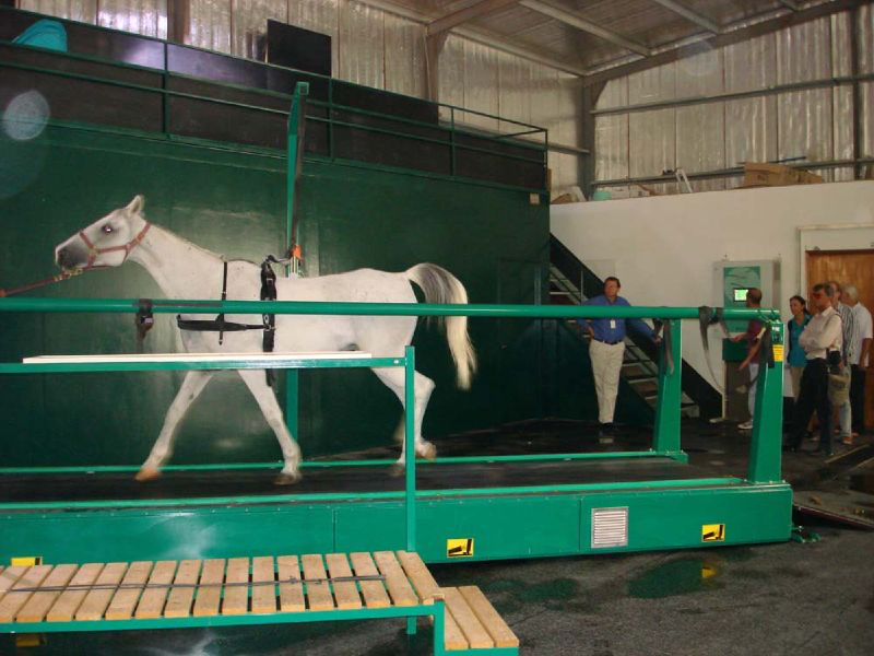 File:Horse on treadmill in Qatar.jpg