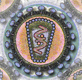 Human Immunodeficency Virus - stylized rendering.jpg
