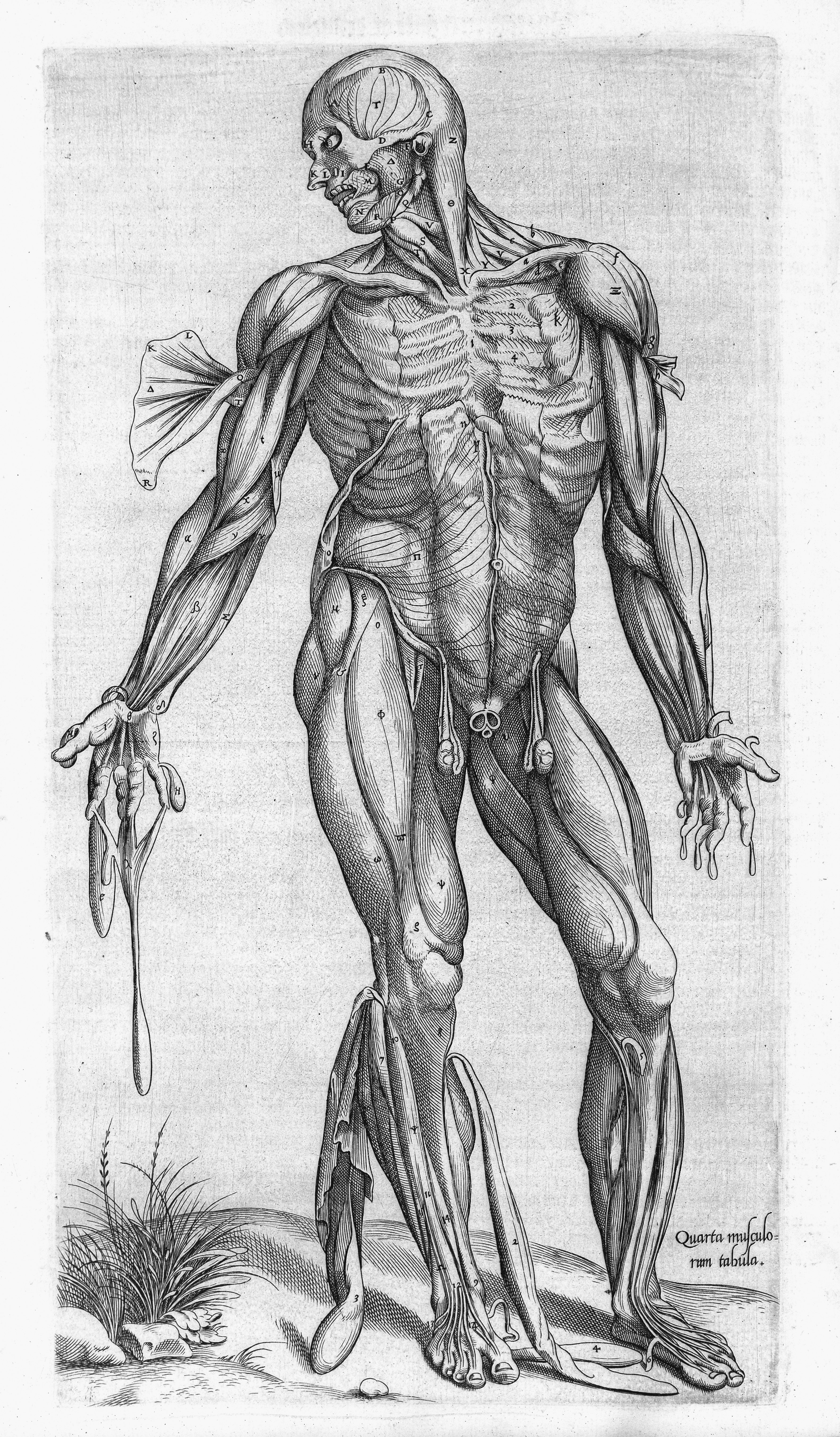 Filehuman Muscles Compendiosa T Geminus 1553 Wellcome